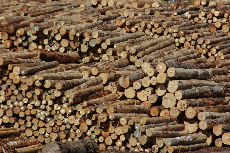 Wood Export