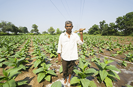 Indian-tobacco-farmer