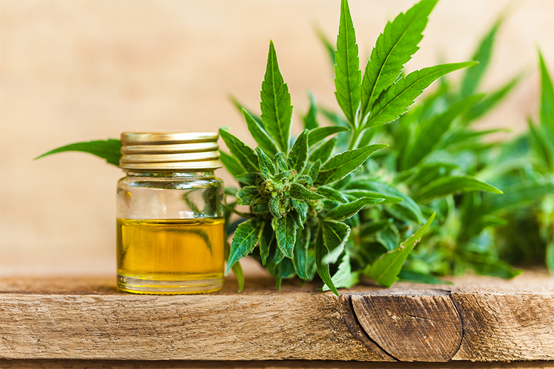 what is cannibis oil