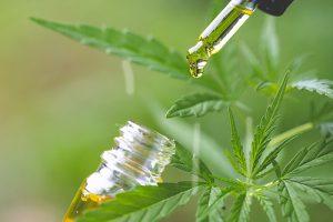 hemp oil vs cbd oil thumbnail