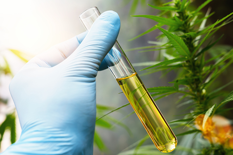 How to Extract CBD: CBD Extraction with CO2 & More