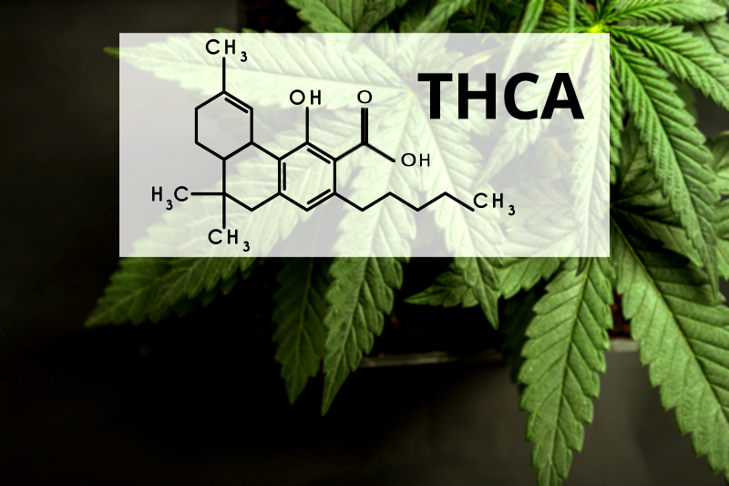 What is THCA and How Is it Different from THC?