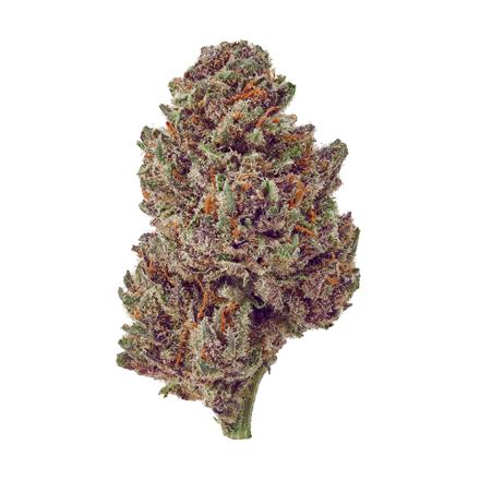 Purple Tsunami cbd hemp flower
