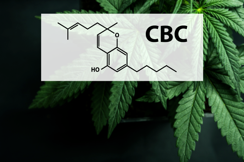 What Is CBC (Cannabichromene)?